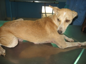 Ramu--after treatment
