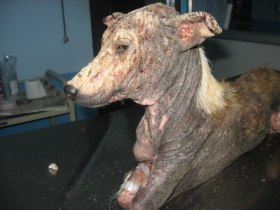 Ramu--before treatment 3